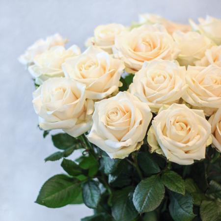 """Baltos rožės """"Avalanche"""""""
