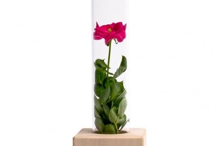 """Rožė mėgintuvėlyje """"Genius rose"""""""