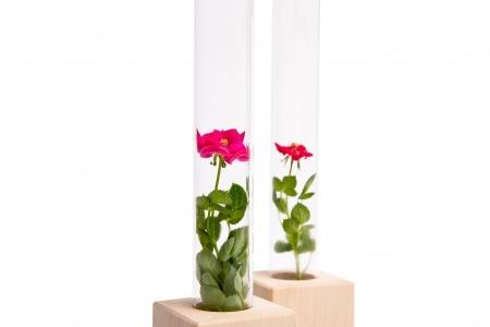 """Rožės mėgintyvėlyje """"Genius rose"""""""