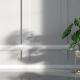 10 augalų, kuriems reikia mažiau saulės (paveiksėlyje: Monstera)