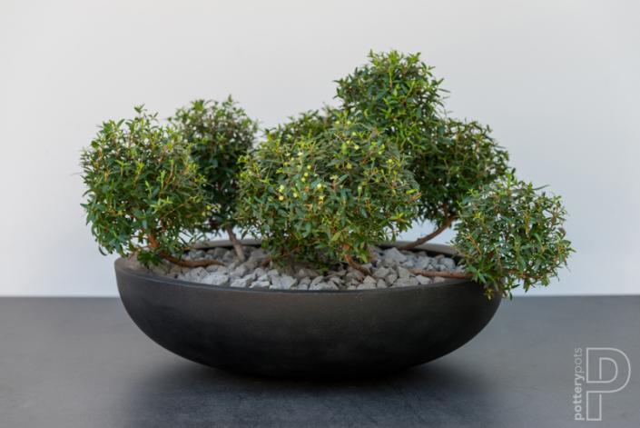 Pottery Pots Natural Monique